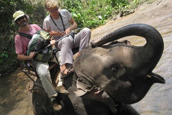 In elefante in Thailandia...